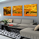 Stretched Canvas Art Landscape Autumn Maples Set of 3