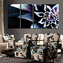 Stretched Canvas Art The colorful flowers Set of 4