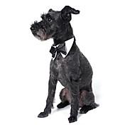 Perros Corbata/Pajarita Ropa para Perro Verano Primavera/Otoño Lazo Adorable Boda Blanco Negro Naranja Amarillo Verde