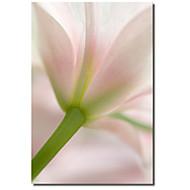 tištěné plátno umění květinové ráno flowerphotos se protáhl rámem