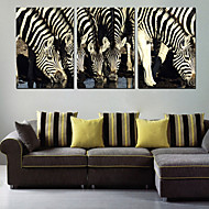 Sträckta kanvas Animal Zebra Group Set av 3