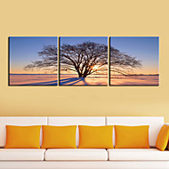 Stretched Canvas Art Botanical Lonely Tree in the Morning  Set of 3