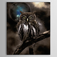 Stretched Canvas Art Night Owl by Color Bakery