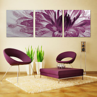 Stretched Canvas Print Art Floral Purple Burst Set of 3