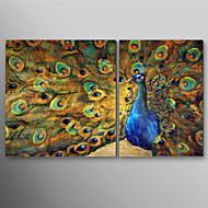 Peint à la main peinture à l'huile animale paon fait la roue avec Set de cadre tendu de 2 prêt à accrocher