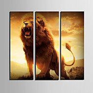 Stretched Canvas Art Animal of The King Set of 3