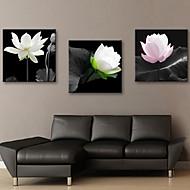 Sträckta canvas konst Blommor Elegant Lotus Set av 3