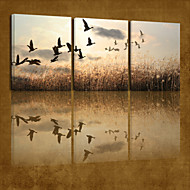 VISUAL STAR®Animal Stretched Canvas Print Art High Quality Sky Bird Canvas Ready To Hang