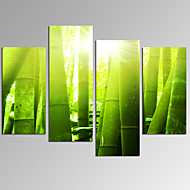 VISUAL STAR®4 Panel Bamboo Forest Picture Print on Canvas Sunlight Artwork Ready to Hang