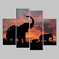 בד מתוח הדפס אומנות בעלי החיים פילים סט של 4