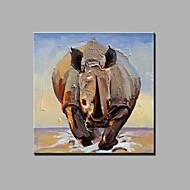 Peint à la main Abstrait Animal Carré,Moderne Un Panneau Toile Peinture à l'huile Hang-peint For Décoration d'intérieur