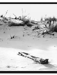 Imprimé sur toile Driftwood Et Dune par Harold Silverman - Plage, palmiers et phares avec cadre Strethed