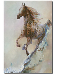 Printed Canvas Art Animal Appaloosa Run by Denton Lund with Stretched Frame