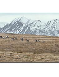 Stampato su tela Paesaggio del Nord Skyline - Caribou da Ron Parker, con telaio allungato
