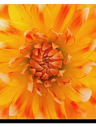 Stampato su tela floreale Petalo di Flowerphotos con telaio in tensione