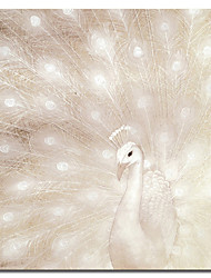 Reproduction transférée sur toile Art Peapock animale dans son fier