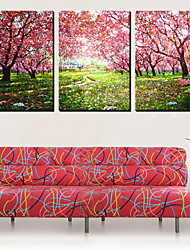 Canvas Art Landscape Manhã Set Forest of 3