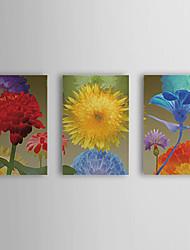 Hand geschilderd olieverfschilderij Bloemen Zonnebloem met gestrekte frame Set van 3 1309C-FL0836