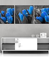 Stretched Canvas Art Botanical Blue Tulip Set of 3