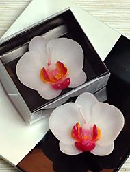 Orquídea mariposa Vela