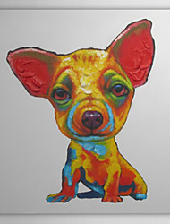 Dipinto a mano pittura a olio animale Chihuahua