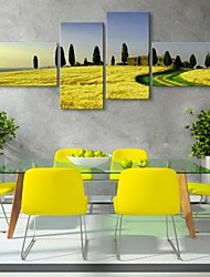 Stretched Canvas Art Yellow Flowers And Landscapes Set of 4