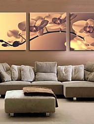 Reproduction transférée sur toile Art Floral Tender Orchid Ensemble de 3