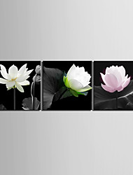 Stretched Canvas Art Floral Elegant Lotus Set of 3