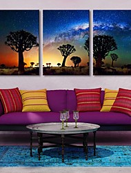 Stretched Canvas Art Desert In The Shadow Of The Tree Set of 3