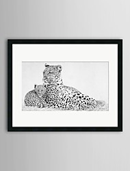 Láminas enmarcadas, manchas animales ver por peter Hildick