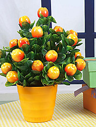 Apple Bonsai Decorative Fruit