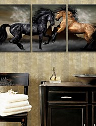 E-HOME® Stretched Canvas Art  Horse Decoration Painting Set of 3