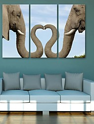 E-HOME® Stretched Canvas Art Elephant Decoration Painting  Set of 3