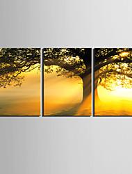 e-home® lona esticada arte do sol sob a árvore set pintura decorativa, de 3 de