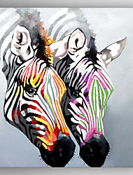 Oil Painting Color Zebra Hand Painted Canvas with Stretched Framed Ready to Hang