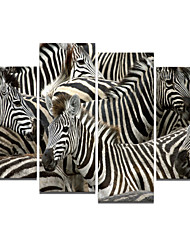 VISUAL STAR®High Quality Zebra Animal Oil Painting on Canvas Ready to Hang
