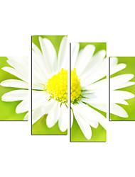 VISUAL STAR®2015 Hot Products Canvas Photo Printing Wall Art Ready to Hang