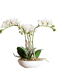 Create For Life®Simulation of the Overall Floral Ornaments Set 4 Fork Ceramic Pots Potted Phalaenopsis White