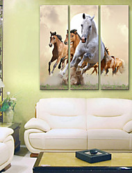 Stretched Canvas Art Running Horse Set of 3