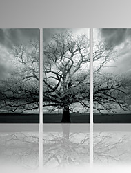 VISUAL STAR®Stretched Canvas Print Winter Large Tree digital print on Canvas Wall Art Set of 3 Ready to Hang