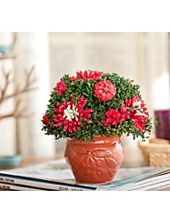 American Rural Locations Really Dry Flower Pot Decorative Furnishing Articles