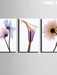 Botanique Toile Trois Panneaux Prêt à accrocher , Format Horizontal
