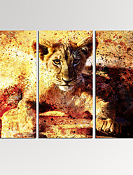 VISUAL STAR®3 Panel Lion Cub Photos Print on Canvas Wall Decoration Animal Canvas Artwork Ready to Hang