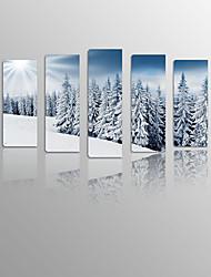 agujas de pino de la nieve en la madera lona capítulo 5 paneles listos para colgar para la decoración de estar