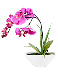 "9.8""L 11.4""H Elegant Phalaenopsis in Ceramic Pot"