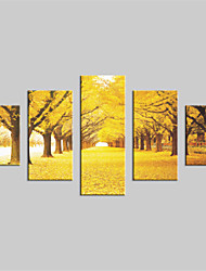 JAMMORY Canvas Set Landscape Modern,Five Panels Gallery Wrapped, Ready To Hang Vertical Print No Frame Maple Grove