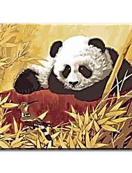Hand Painted Oil Painting china panda with Stretched Frame Ready to Hang
