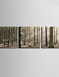 E-HOME® Stretched Canvas Art The Sun In The Thick Woods Decoration Painting  Set of 3