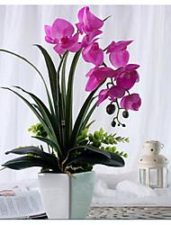 Poliéster Decorações do casamento-1Piece / Set Flor Artificial Ano Novo / Casamento Clássico Fúcsia Primavera / Verão / Outono / Inverno