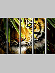 E-HOME® Stretched Canvas Art Tiger Decorative Painting Set of 5